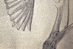 21_2014convo2detail_bird